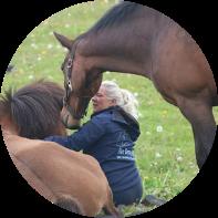 Kontakt Dagmars Hestetræning