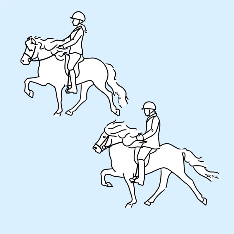 Igangsætning af den islandske hest - tølt