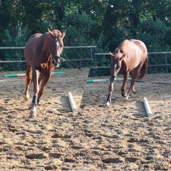 Hesten balance - hest i longe