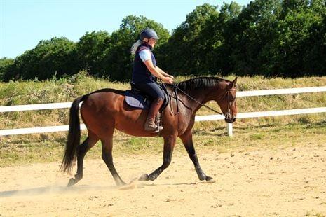 hesten balance - hest i balance