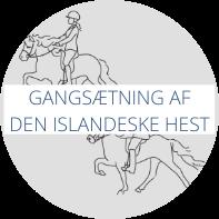 Gangsætning af den islandske hest