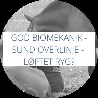 God biomekanik - sund overlinje - hvornår er hestens ryg løftet?