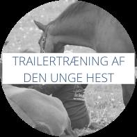 Trailertræning af den unge hest